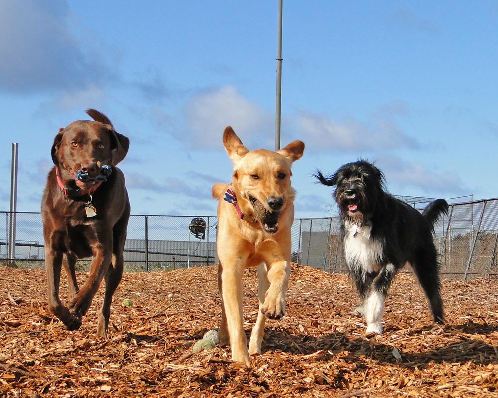 Culver City Dog Park